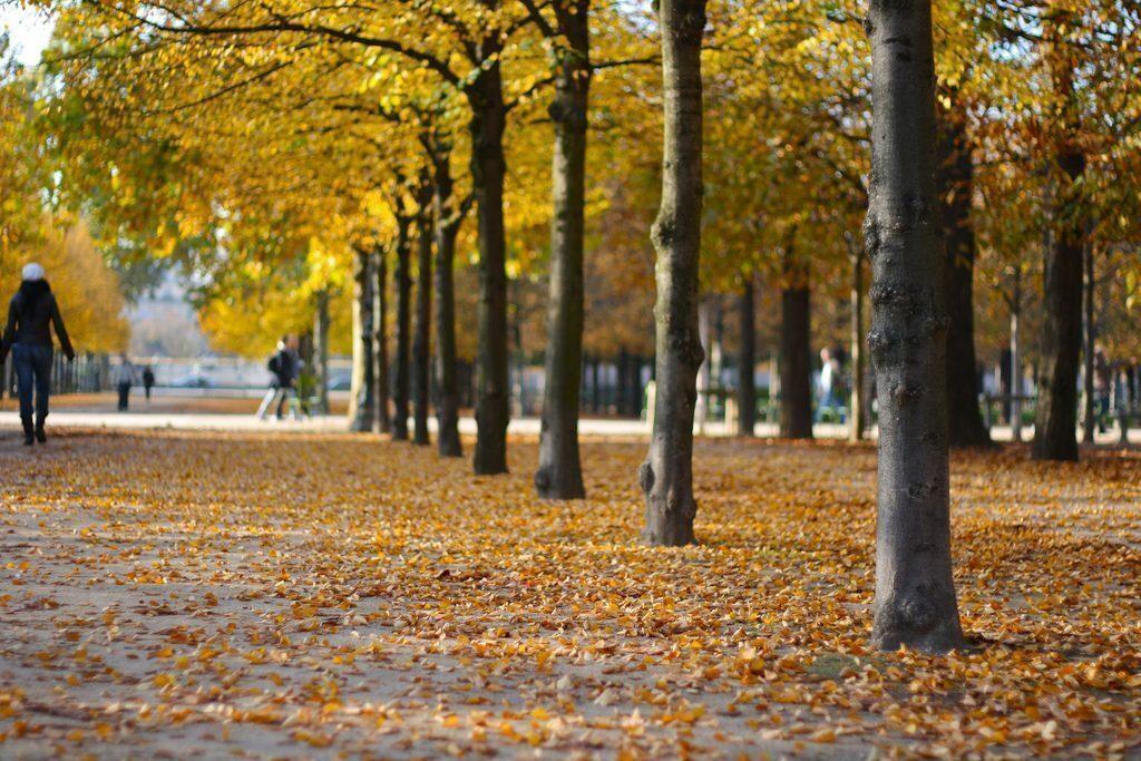parigi-autunno