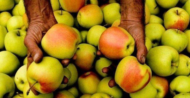 Pomaria, la regina della mele in Val di Non