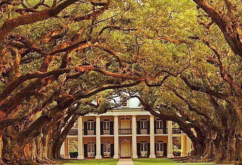 Oak Alley Plantation in Louisiana, la meravigliosa piantagione