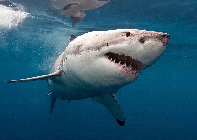 attacco-squalo-assicurazione