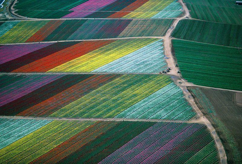 california-campi-fiori