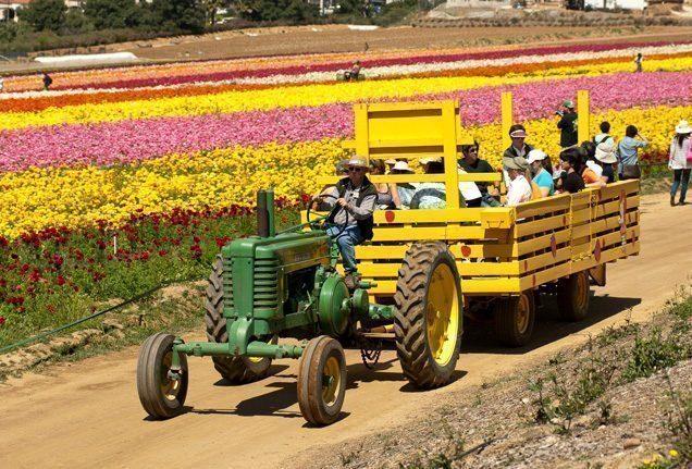 california-fiori-trattore