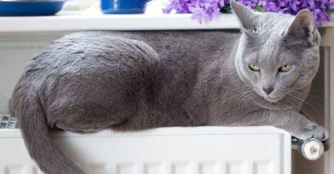 Apre il primo caffè per gatti a Londra