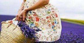 Assistere alla fioritura della lavanda in Provenza