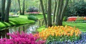 Il 1° maggio in Olanda tra i campi di tulipani