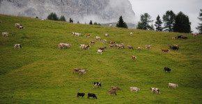 Blog Tour #AlbeinMalga in Trentino, il racconto del primo giorno