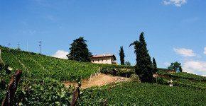 Sulla strada del Gewurtztraminer in Alto Adige