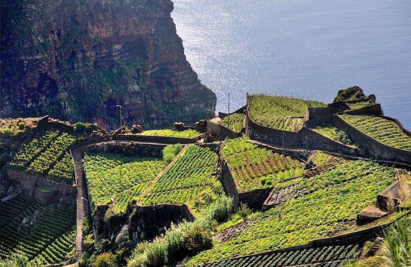 Madeira campi