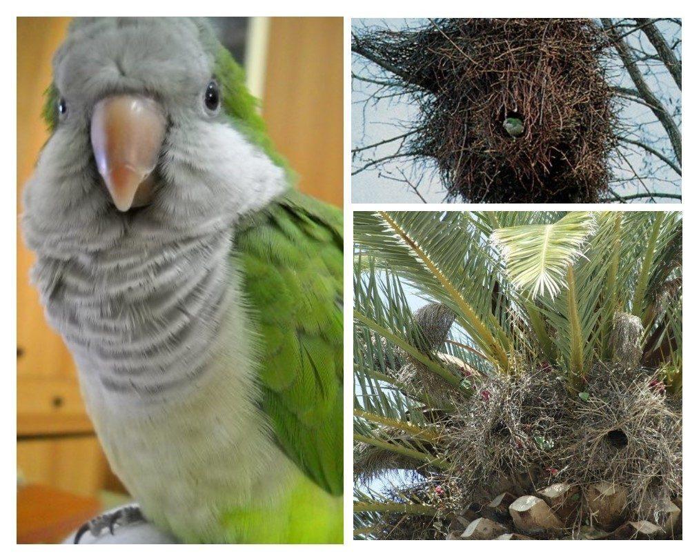 pappagalli a molfetta