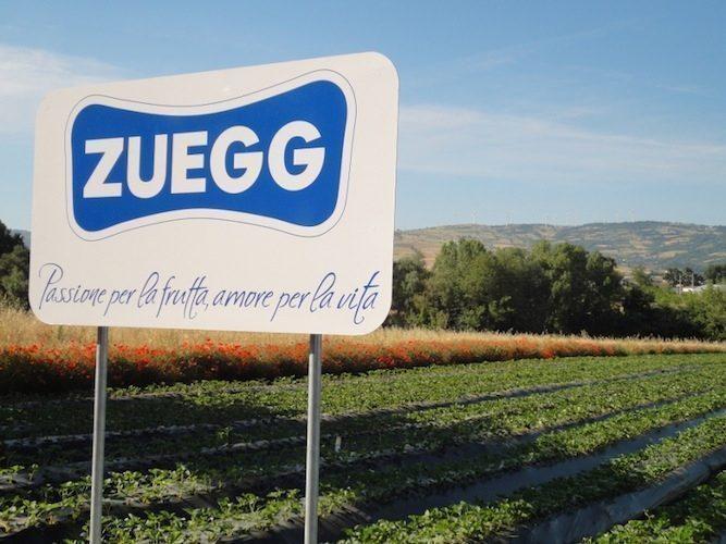 zuegg-passione-per-frutta-amore-per-vita-viazueggit