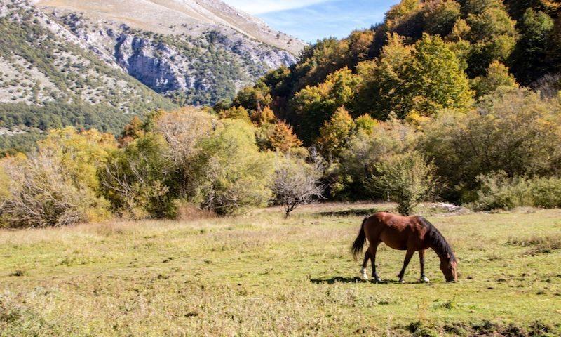 Cavallo Abruzzo