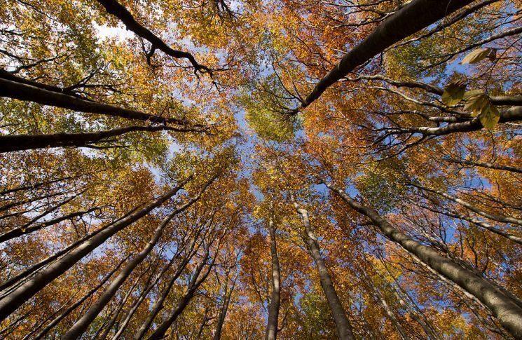 foreste-casentinesi-romagna