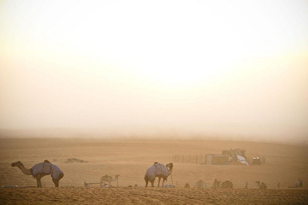 muscat-deserto