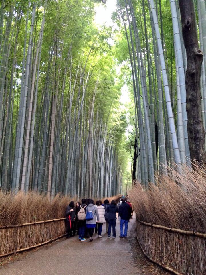 kyoto-bosco-bambù