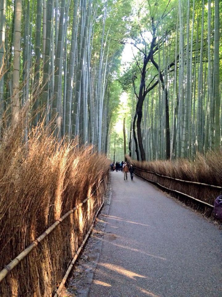 kyoto-boscobambù