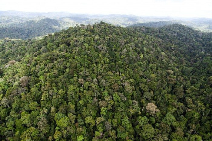 amazzonia-foresta