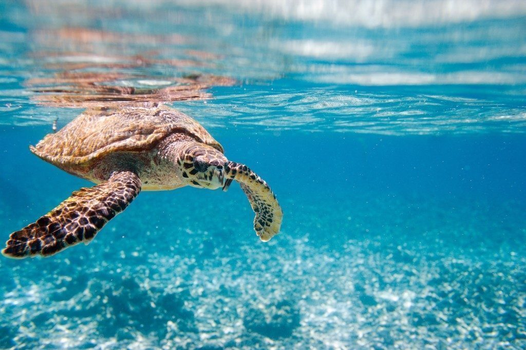 seychelles-tartaruga