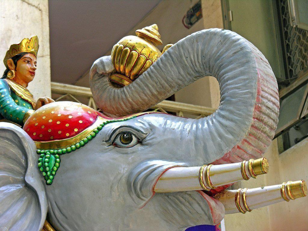 india-elefante