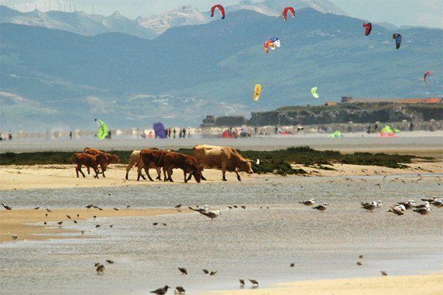 kitesurf-spagna-Playa Los Lances
