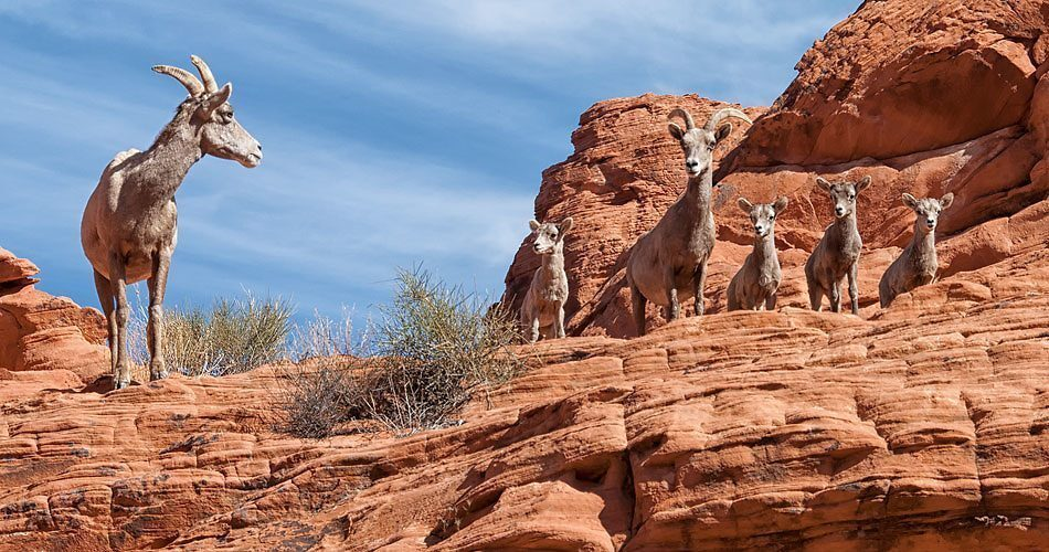 Valley of Fire-usa-nevada