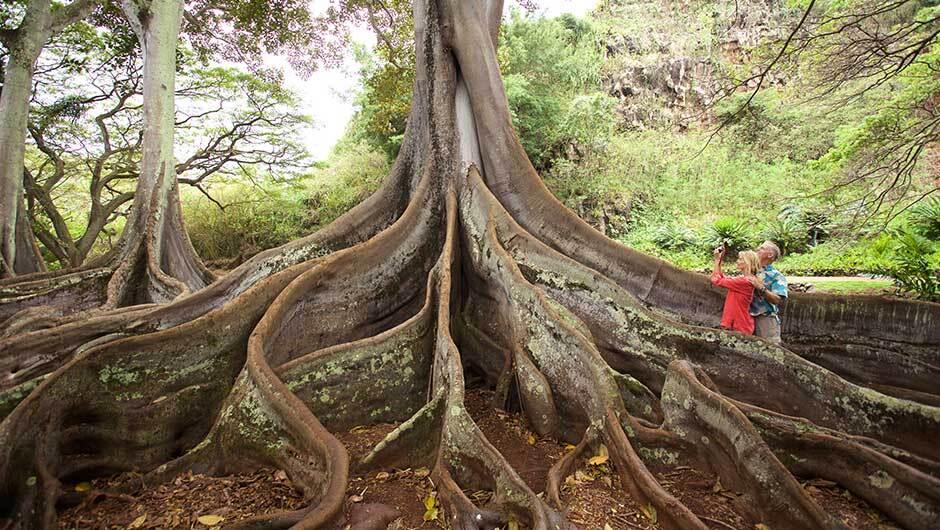 hawaii-Mc Bryde Garden