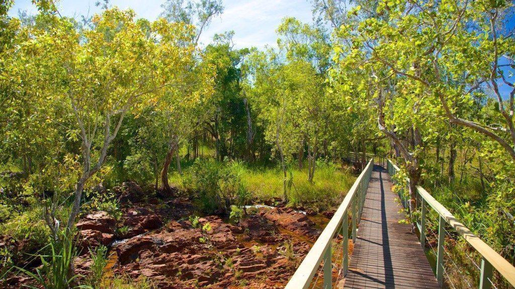 australia-Litchfield-come-arrivare