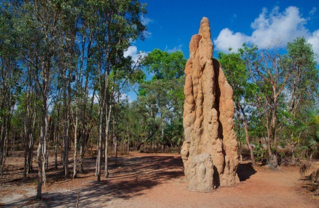 australia-Litchfield-territoridelnord