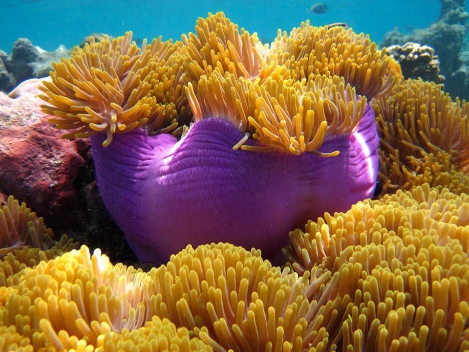 maldive-in-acqua
