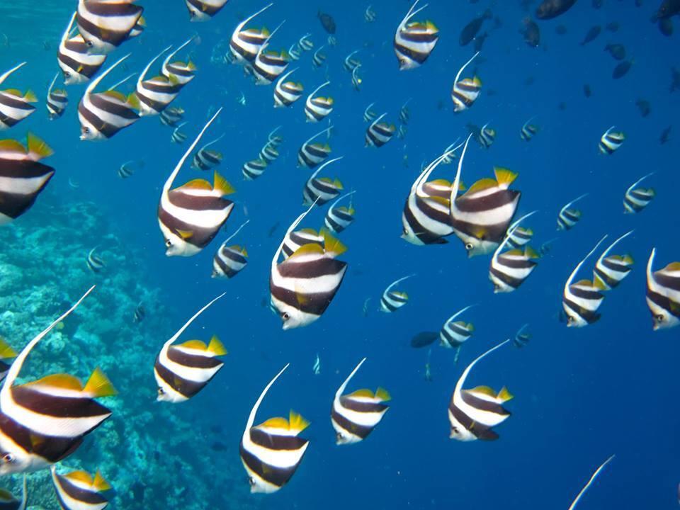 maldive-pesci