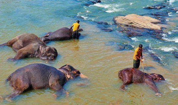 sri-lanka-elefanti-lavaggio