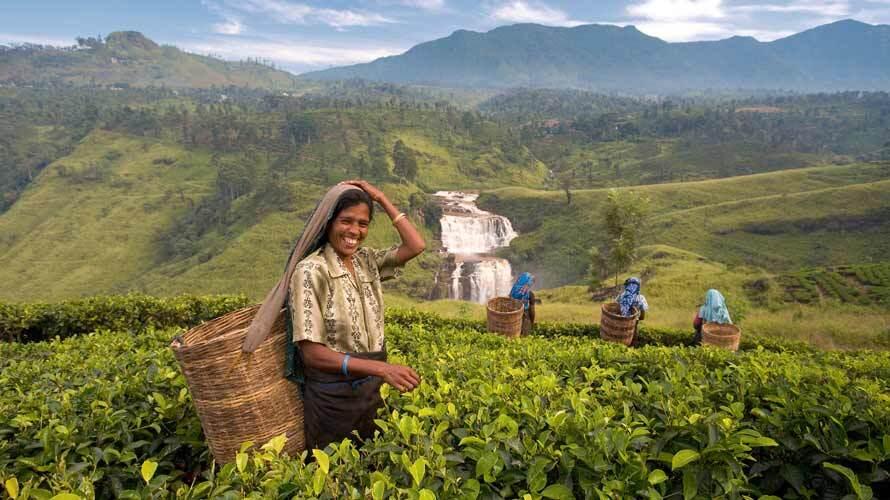 sri-lanka-piantagioni