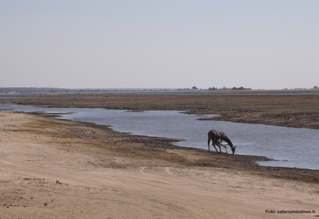 giraffa-hwange