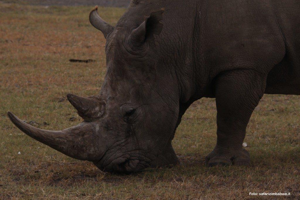 rinoceronte-matopos