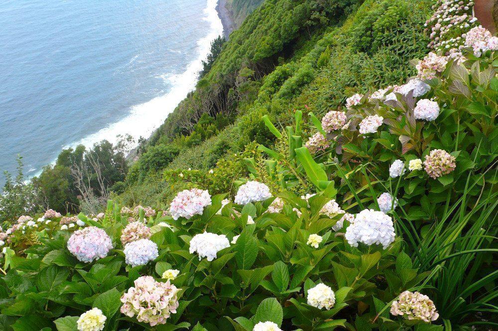azzorre-fiori