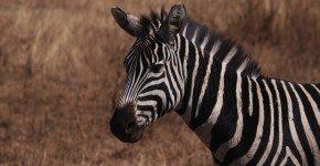Safari in Zimbabwe, le Informazioni utili