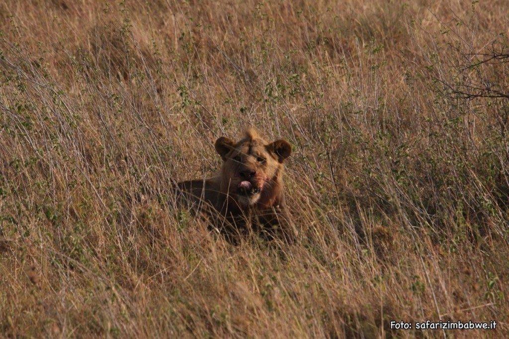 safari-alessio