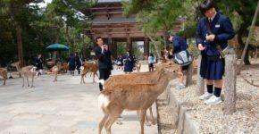 Nara, cosa vedere oltre i cervi