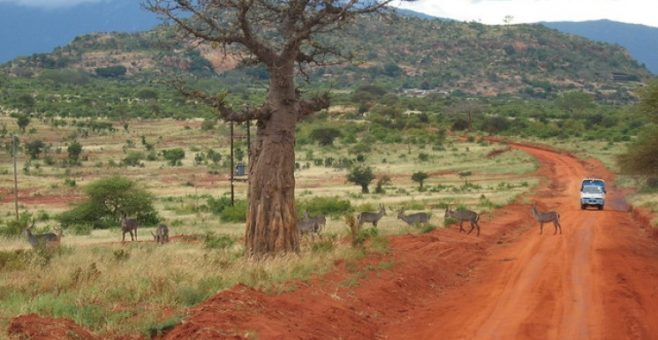 Un sogno chiamato Kenya: safari e relax