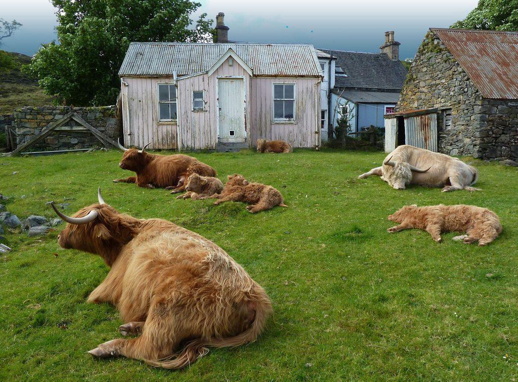 scozia-penisola-duirinish