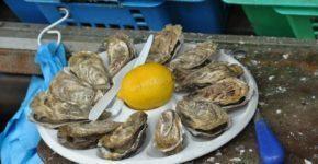Cancale, la capitale delle ostriche