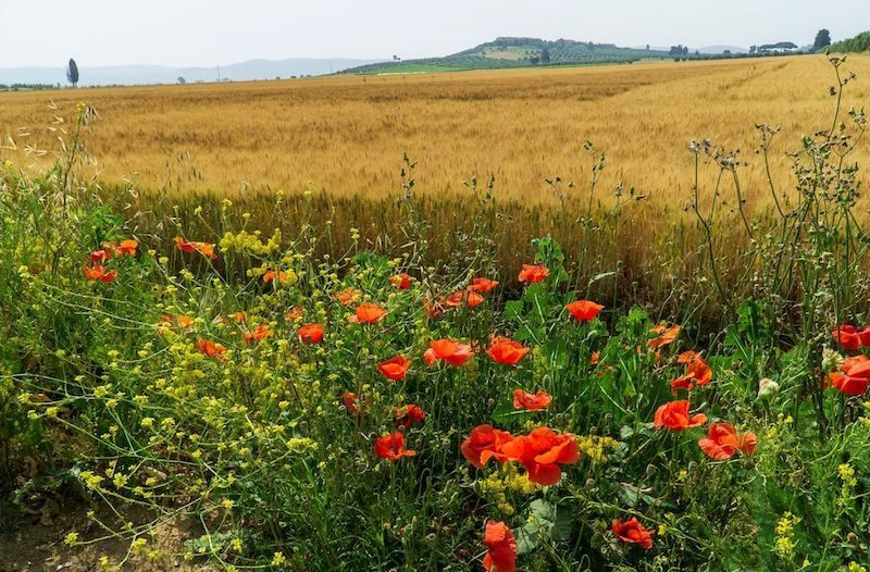 Toscana Grosseto