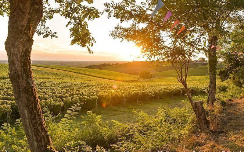 Bordeaux vigneti